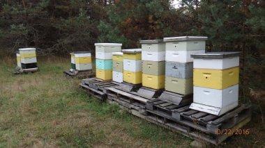 ABT_Hives
