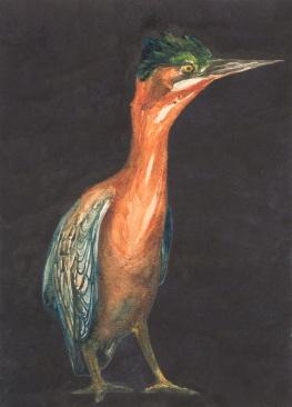 ABT_Juv_Grn_Heron_Painting